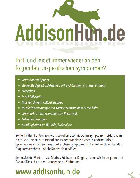 zucker hund symptome