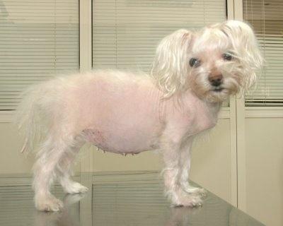 Morbus Cushing Hund