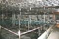 Bild der Referenz Sanierung eines Schwimmbades in Wesseling
