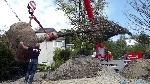 Bild der Referenz Gro�baumverpflanzung