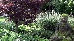Bild der Referenz asiatischer Garten