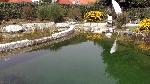 Bild der Referenz Schwimmteich